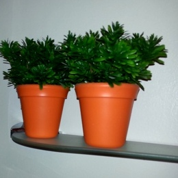 Silkeplanter på et badeværelse uden vinduer
