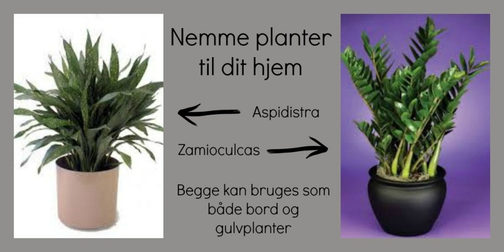 Et par grønne planter som er nemme at holde. For dig som ikke er den store blomstervander.